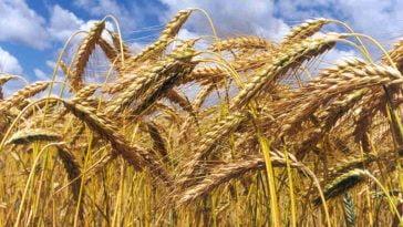 ministros da Agricultura da União Europeia assinaram uma declaração conjunta