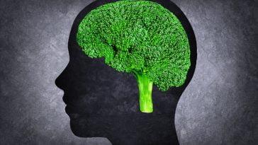 Ilustração da cabeça humana com cérebro em vez de brócolis