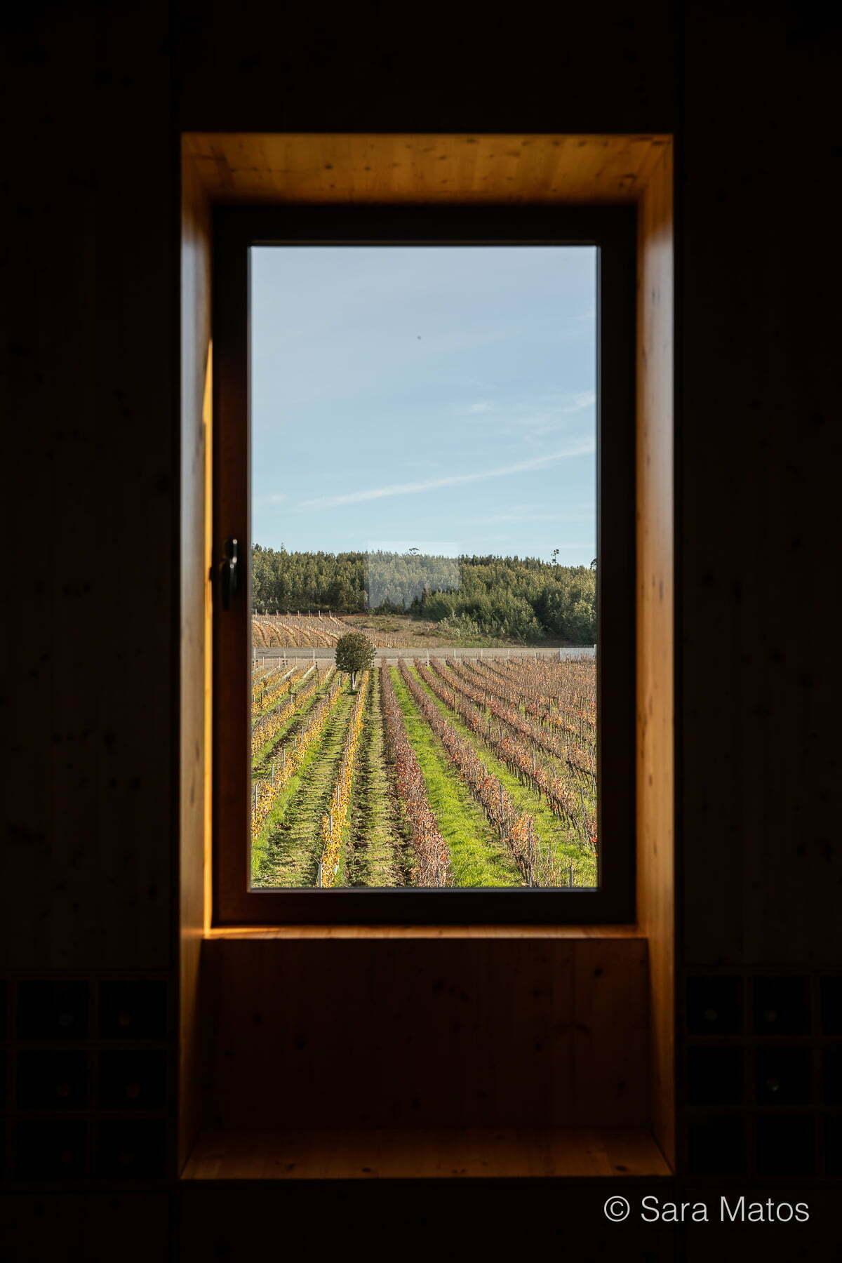 A vista da vinha da Quinta dos Abibes